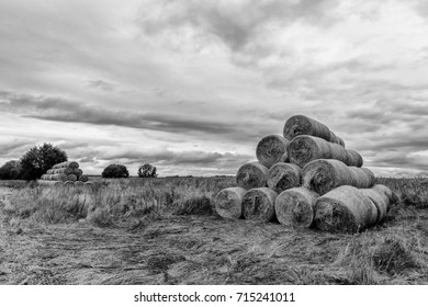 Haystacks on the field in Autumn season. Rural landscape with cloudy sky background. Golden harvest of wheat in evening. Preparation of mixed fodder for animals.