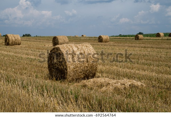 Haystacks on the field, harvesting, countryside scenery.