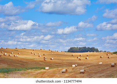 Lot of Haystacks on the Field in Lithuania