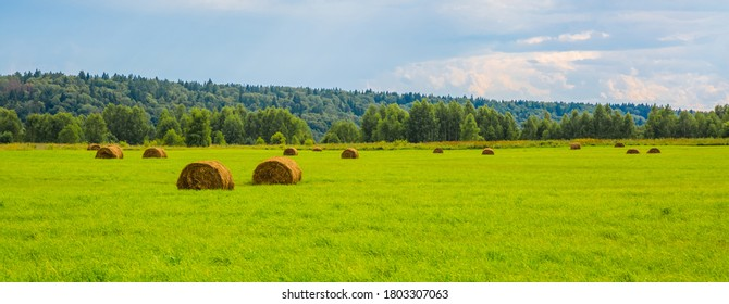 Haystacks on a green field near the forest