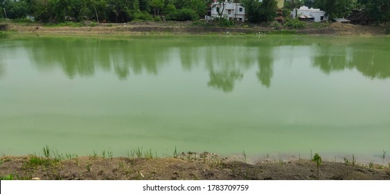 Hazardous algae and plankton growth cause the water source stagnant and polluted and unusable