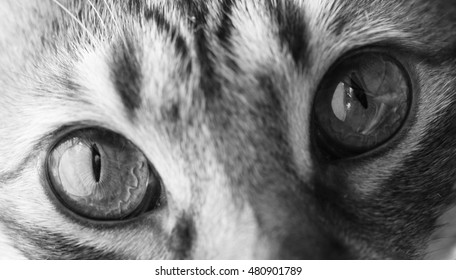hazel cats eyes black and white