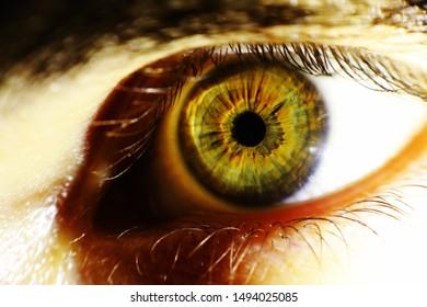 A hazel color eye with macro lens
