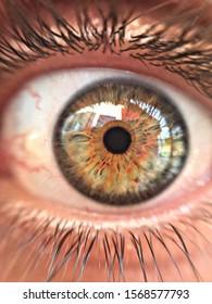 hazel colored big human eye