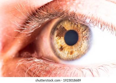 hazel eye with beautiful details inside