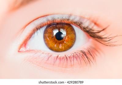 Hazel Eyes Images Stock Photos Amp Vectors Shutterstock