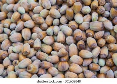 Hazel nut background