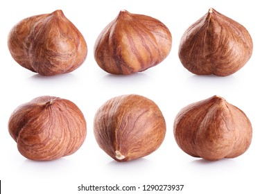 Hazelnut collection isolated on white background. With clipping path.