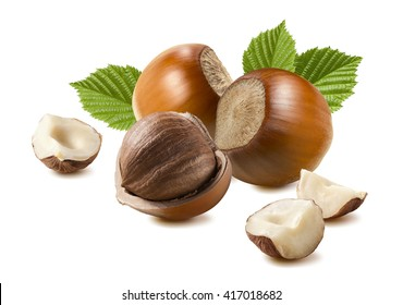Hazelnut composition pieces leaves 6 isolated on white background as package design element