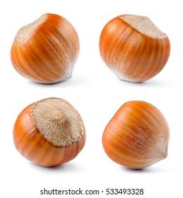 Hazelnut. Fresh organic filbert isolated on white background. Nut macro. Collection.