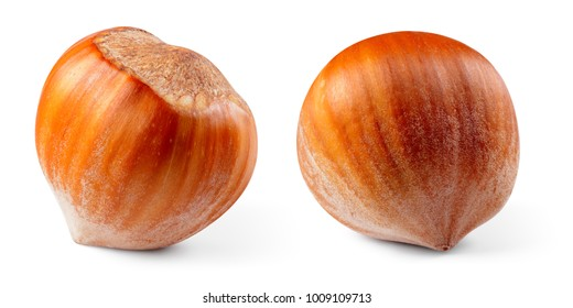 Hazelnut. Hazelnut isolated on white background. With clipping path. Collection.