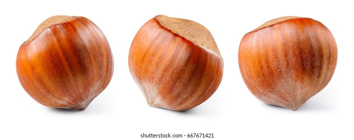 Hazelnut isolated on white background. Nut macro. With clipping path. Collection.