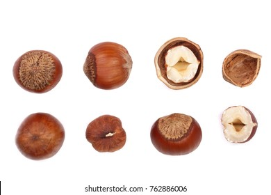 Hazelnut isolated on white background. Set or collection. Top view