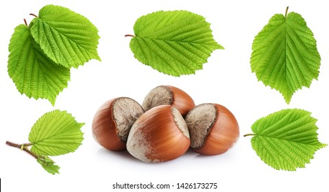 Hazelnut and leaf isolated on white background. With clipping path.
