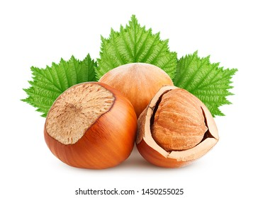 hazelnut leaf, isolated on white background, clipping path, full depth of field