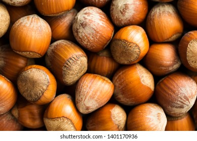 Hazelnut macro abstract background, top view. Heap of nuts in nutshell closeup