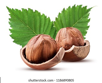 Hazelnut in shell with leaf. Fresh organic filbert isolated on white background. Clipping Path. Full depth of field.