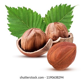 Hazelnut in shell and one peeled with leaf. Fresh organic filbert isolated on white background. Clipping Path. Full depth of field.