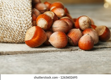 Hazelnuts in a cover, poured out from a bag from burlap on a gray wooden table. Organic New Received. In healthy vegetarian super food
