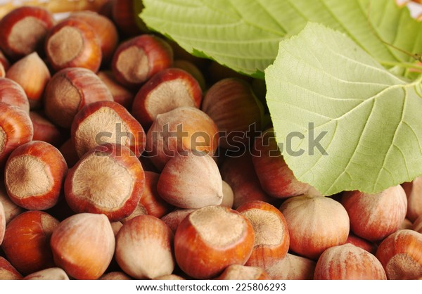 Hazelnuts, filberts in shells and green leaves.