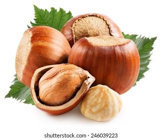 Hazelnuts with leaf