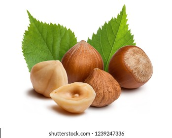 Hazelnuts and leafs isolated on white background