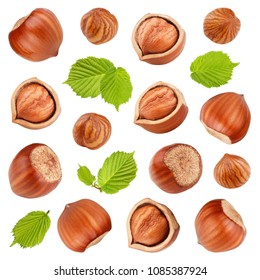 Hazelnuts with leaves isolated on white background. Collection