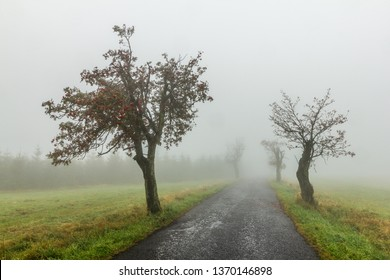 Hazy autumn day in countryside. Very sad and depressing scene. Old and narrow road leading among the trees into distance. Wet, foggy and moody.