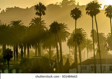 Hazy  golden beach sunset sky with palm trees silhouettes in Santa Barbara, California.