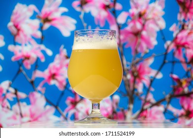 Hazy India pale ale beer in a tulip glass with a spring flower blossom tree in the background.