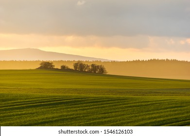 hazy rural evening landscape with golden light and group of trees in the distance. grey hills in the background and field with fresh green in foreground