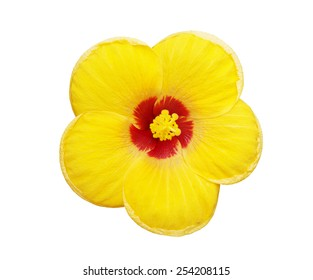 Hbiscus flower isolated on white