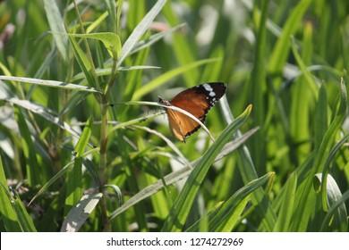 HD Butterfly Wallpepar