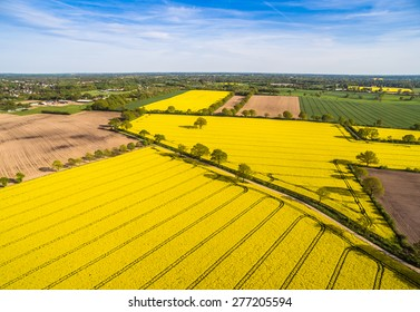 HDR aerial view of a canola field on a sunny day