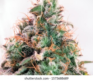 HDR close up shot of a cannabis plant blossom