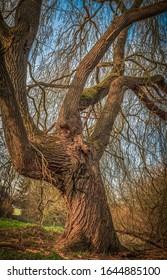 HDR eines großen Baumes mit vielen Ästen.