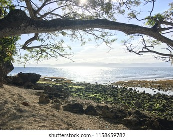 An HDR photo of the coast in Dumanjug, Cebu, Philippines. It was taken one afternoon showing a branch of a nearby tree and the specks of bright light reflected from the sun by the surface of the sea.