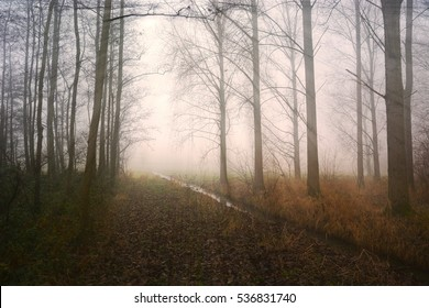 HDR photography, Forest