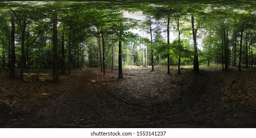 HDRI Deep forest Panorama in summer