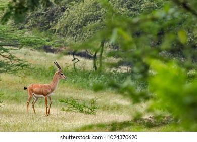 Chinkara Images, Stock Photos & Vectors | Shutterstock