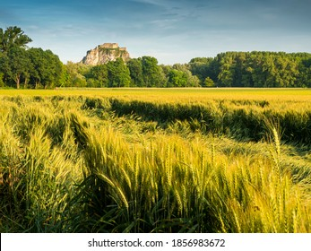 he shiny golden grain fields in the afternoon sunlight
