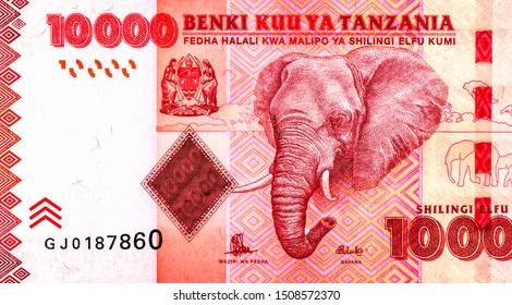 Head of an African Elephant (Loxodonta). Elephants in African savanna. Portrait from Tanzania 5000 Shillings 2010 Banknotes. An Old paper banknote, vintage retro. Famous ancient Banknotes. Collection.