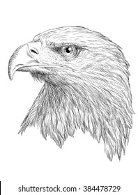 Head of bald eagle hand draw monochrome on white background illustration.