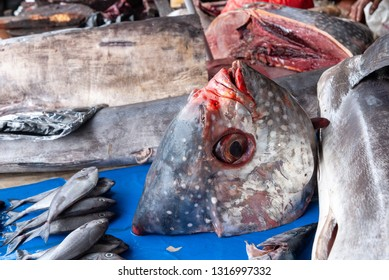 Head of a big fish on Tomohon market in Sulawesi, Indonesia
