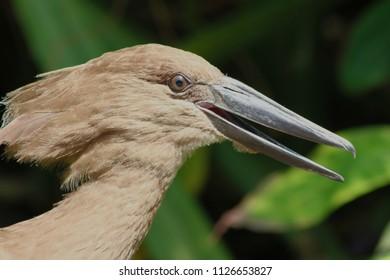 The head of a bird