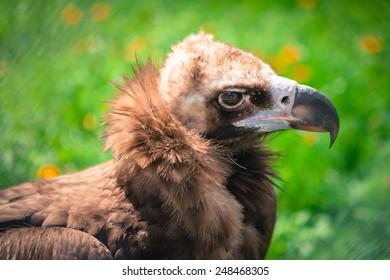 head of a bird of prey closeup