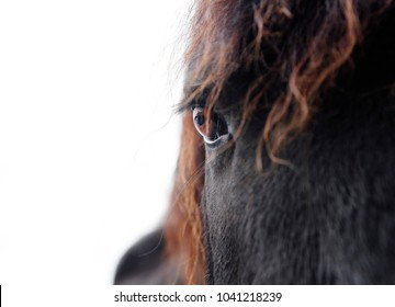 the head of a black friesian horse against white background