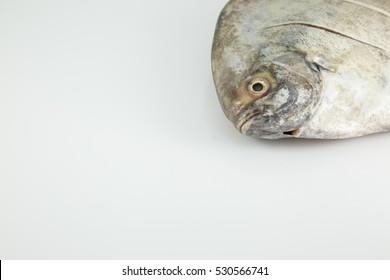 Head black pomfret live on white background, seafood concept.Fish Live.