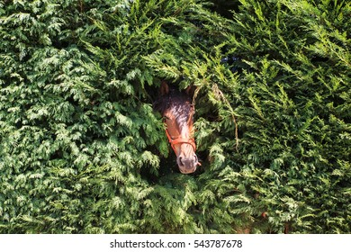 Head of brown horse come out through the fence