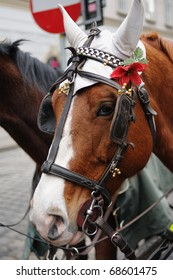 Head of brown horse with harness and red flower in Wien